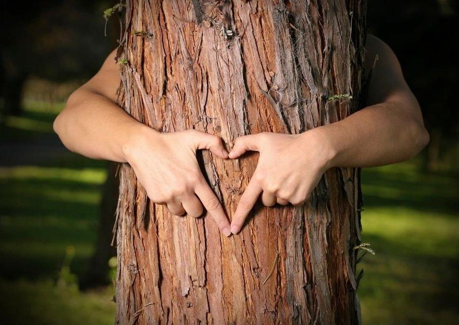 alberi-da-abbracciare